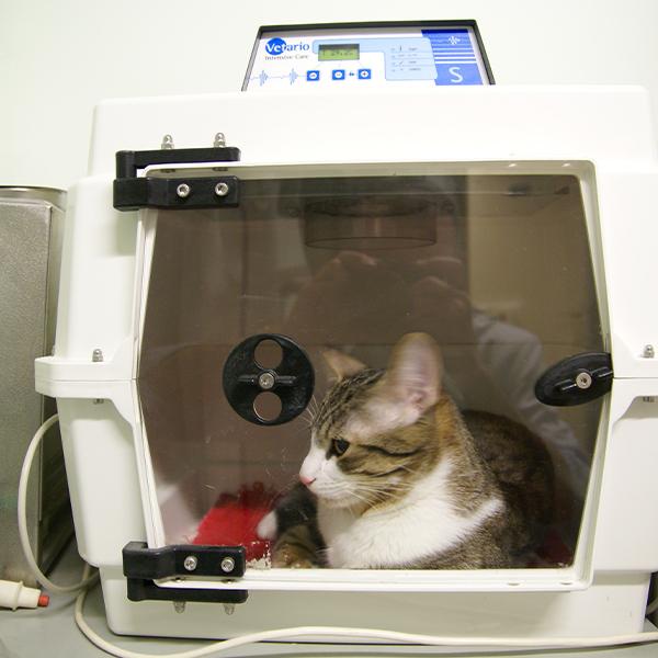 chat hospitalisé